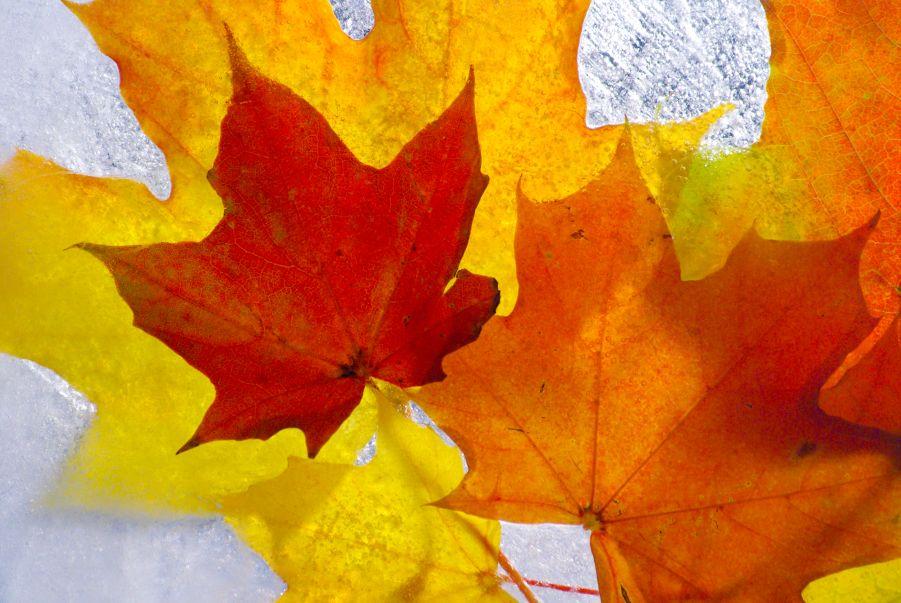 Bilan couture d'automne